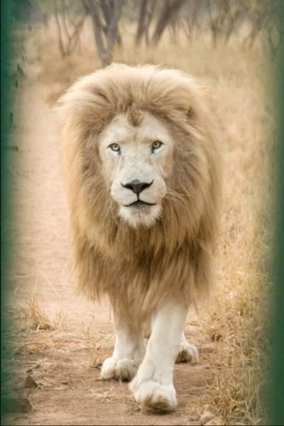 global white lion trustnews