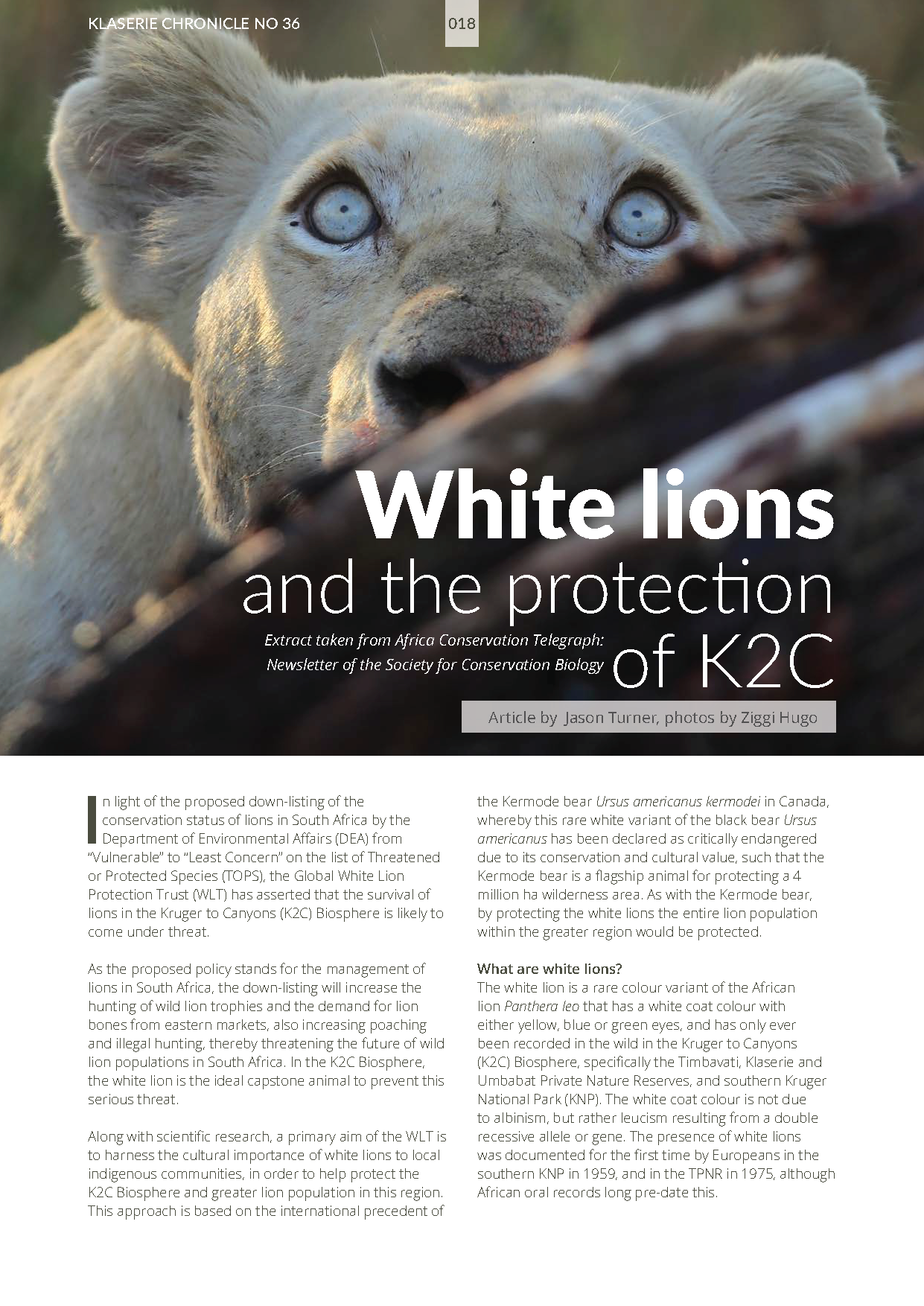 Klaserie Chronicle_WLT_White Lion Article 2016[4] 2